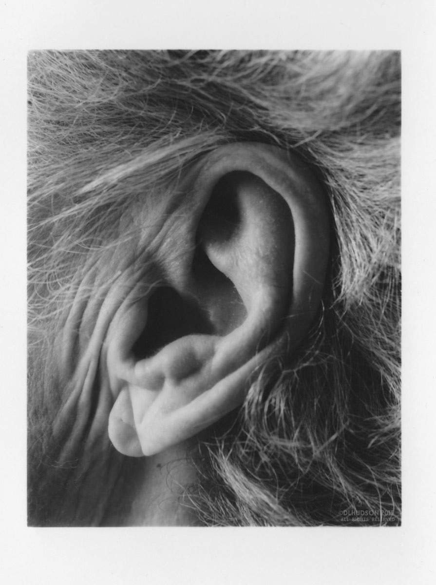 Darkroom Print // The Ear // ©DL HUDSON PHOTOGRAPHY