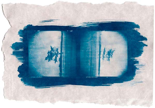 Cyanotype with Forgotten Negatives
