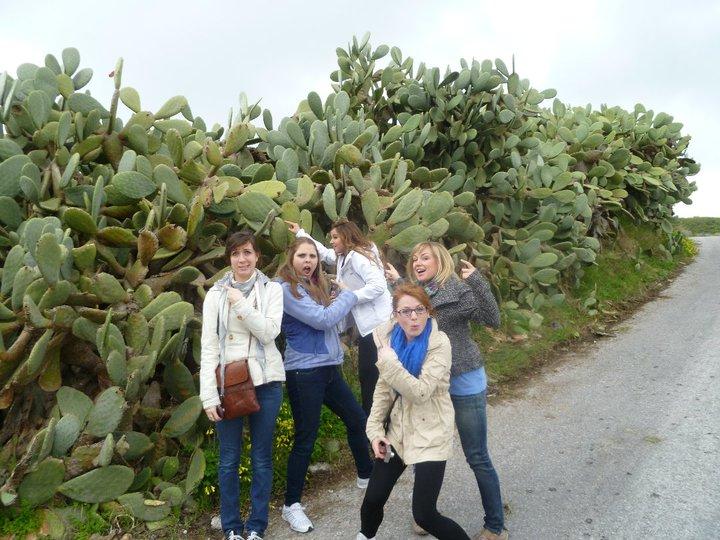 Santorini Cacti