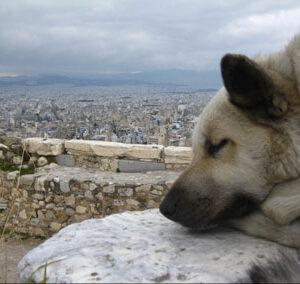 Grecian Wild Dogs // DL Hudson