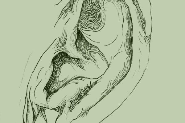 Illustration of Ear / ©Andrea Dre L Hudson 2016, All rights reserved