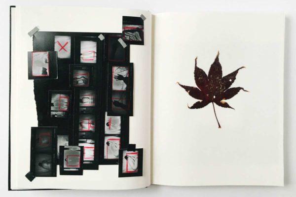 Oriental Maple, From the Darkroom Journal